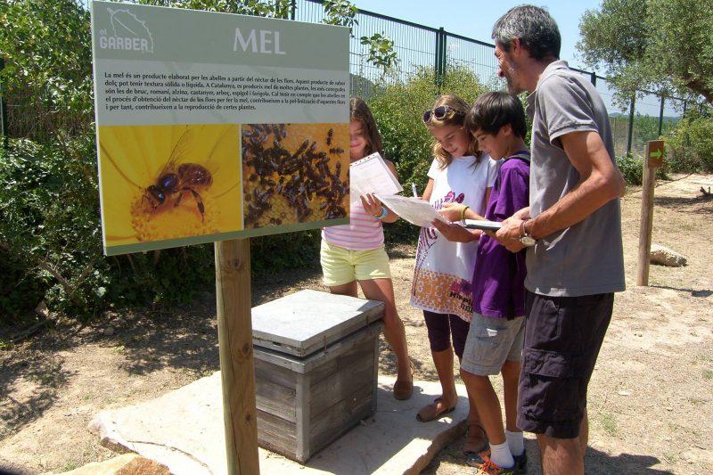 Taller abelles